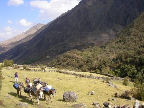 Donkeys carrying our gear, Santa Cruz trek, Peru