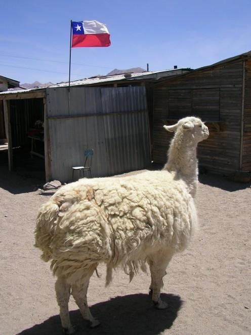 A proud Chilean