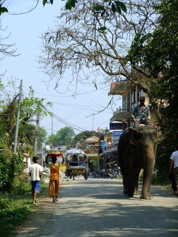 An elephant about town, Sauraha, Nepal