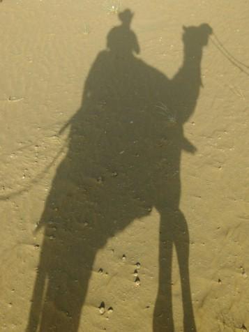 Camel silhouette, Great Thar desert, India