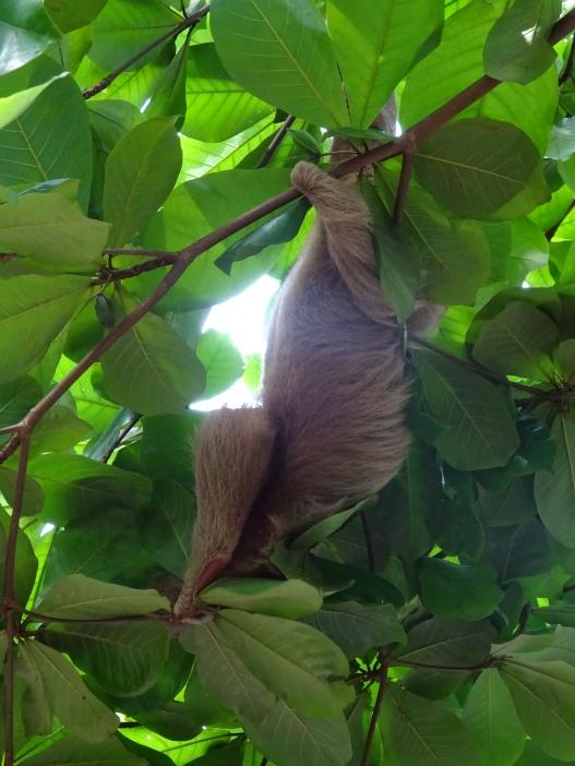 Lazy sloth