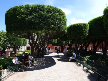 Weird trees in main square