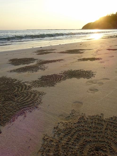 Crab trails